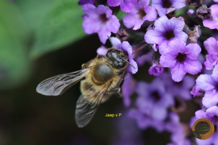 Bloemen , Bijen en Stuifmeel vervolg - Pagina 2 ...